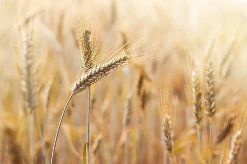 Europosłowie apelują o utworzenie nadzwyczajnego środka reakcji na COVID-19 w sektorze rolniczym