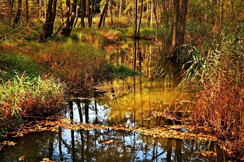 Ostrów Mazowiecka: nadleśnictwo zakazało wstępu do lasu
