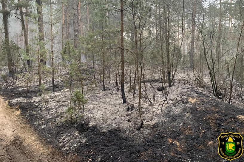 Gmina Olszewo-Borki: Pożar lasu – strażacy mówią, że to było podpalenie
