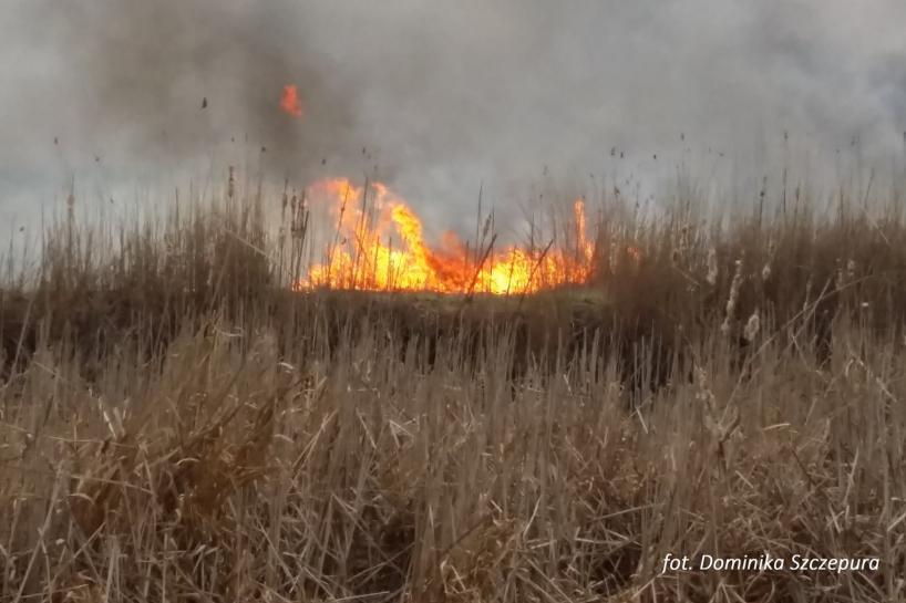 Region. Biebrzański Park Narodowy – trwa dogaszanie pożaru