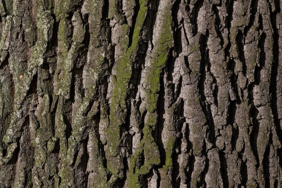Ostrołęka: Drzewa będą miały wiedźmińskie nazwy