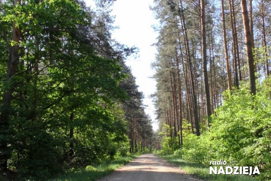 Region: Trudna sytuacja w lasach. Zapalność ściółki jest ekstremalna