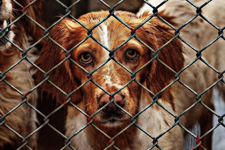 Łomża: Brakuje karmy dla zwierząt ze schroniska