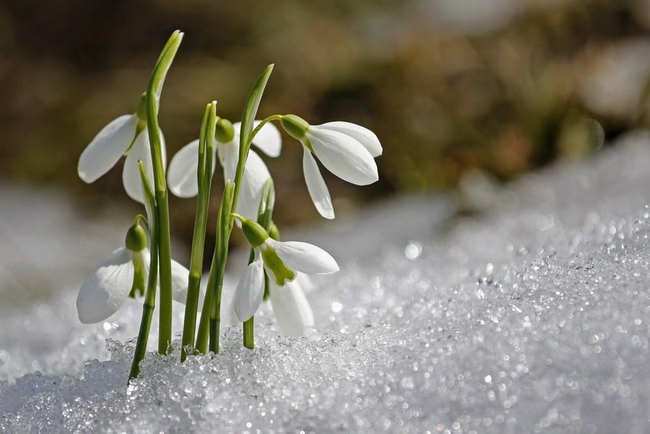 Sonda: Mieszkańcy Łomży czują wiosnę