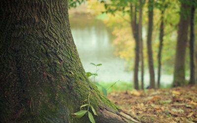 Łapy: Już dzisiaj będziesz mógł zasadzić swoje drzewko