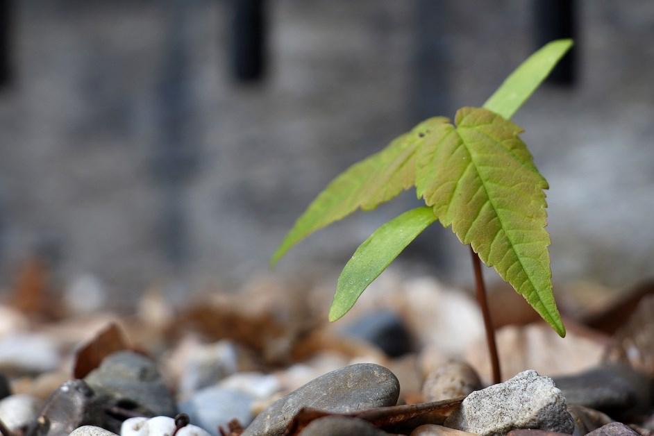 Łomża: Ekologiczna wiosna nabiera rozpędu