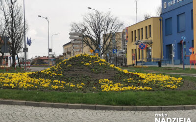 Łomża: Na terenie miasta trwają jesienne nasadzenia