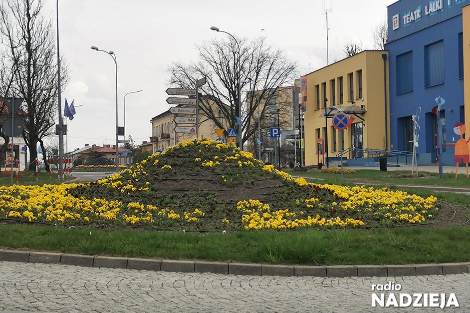 Łomża: Przygotowywanie zieleni miejskiej to długi proces