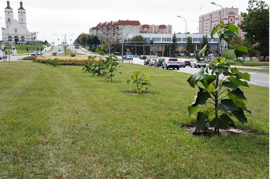 Łomża: ŁSM posadzi drzewka tlenowe