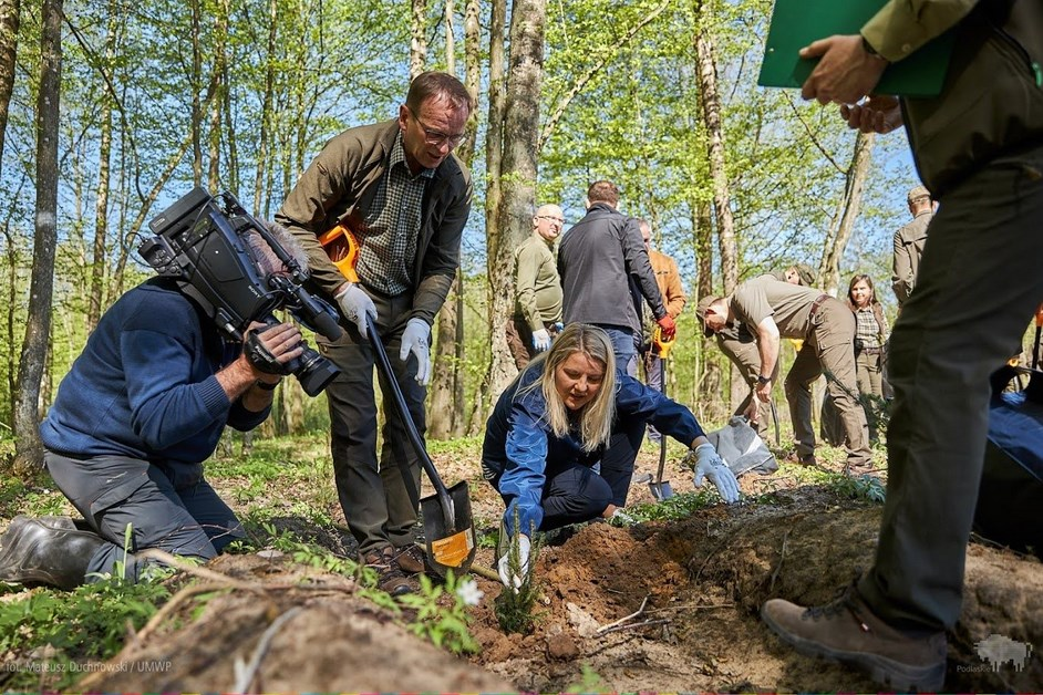 Region: W Nadleśnictwie Rudka posadzono las Franciszka