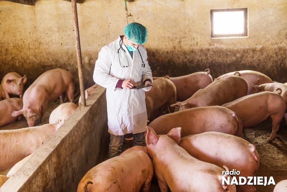 Rolnictwo: Będzie skoordynowany program walki ze skutkami wirusa ASF