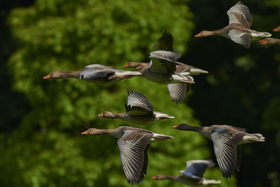 Region: Ptaki odlatują w cieplejsze miejsca
