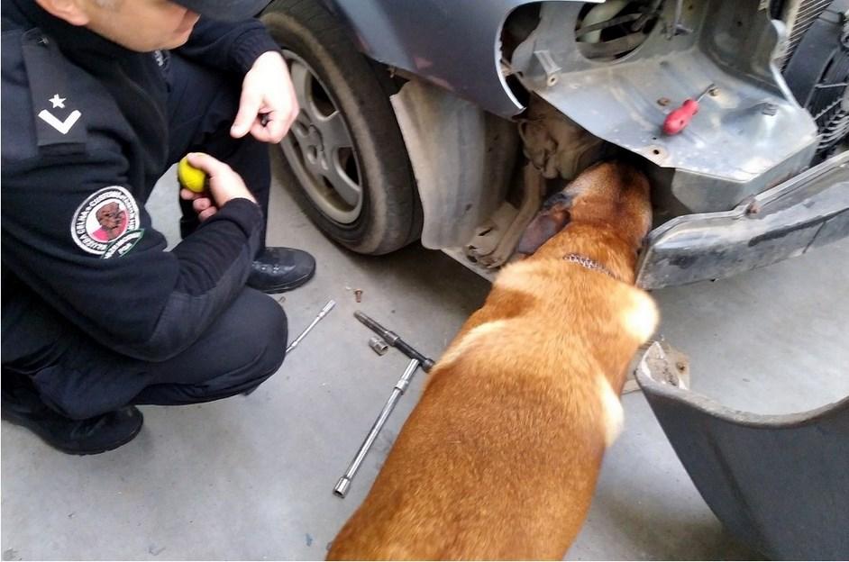 Podlaskie: Pies Argo pomógł w złapaniu przemytników